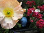 garden decorations :-)